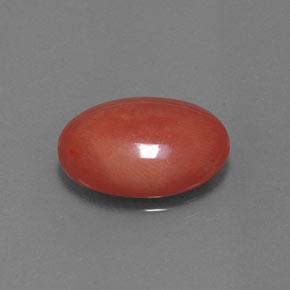 Orange-Red Coral