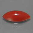 Deep Red Coral