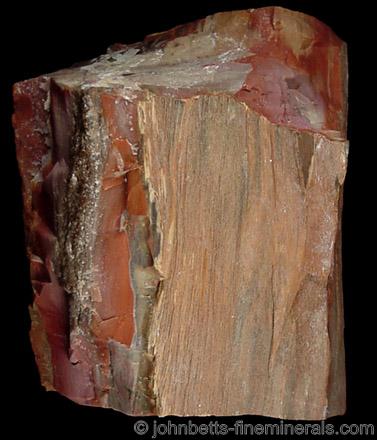 Petrified Wood Chunk