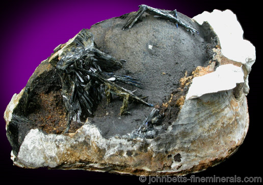 Vivianite in Fossilized Clam